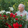 Grower of roses — Stock Photo