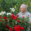 Grower of roses — Stock Photo #4214666