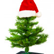 Stock Photo: Xmas tree with red hat