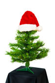 Xmas tree with red hat — Stock Photo