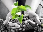 Plant — Stockfoto
