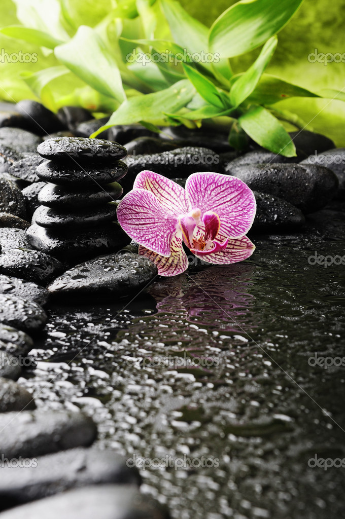 Zen stones and pink orchid in the water — Stock Photo #4349534