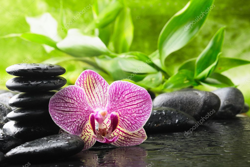 Zen stones and pink orchid in the water — Stok fotoğraf #4349566