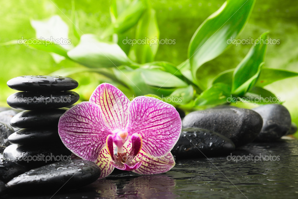 Zen stones and pink orchid in the water  Lizenzfreies Foto #4349566
