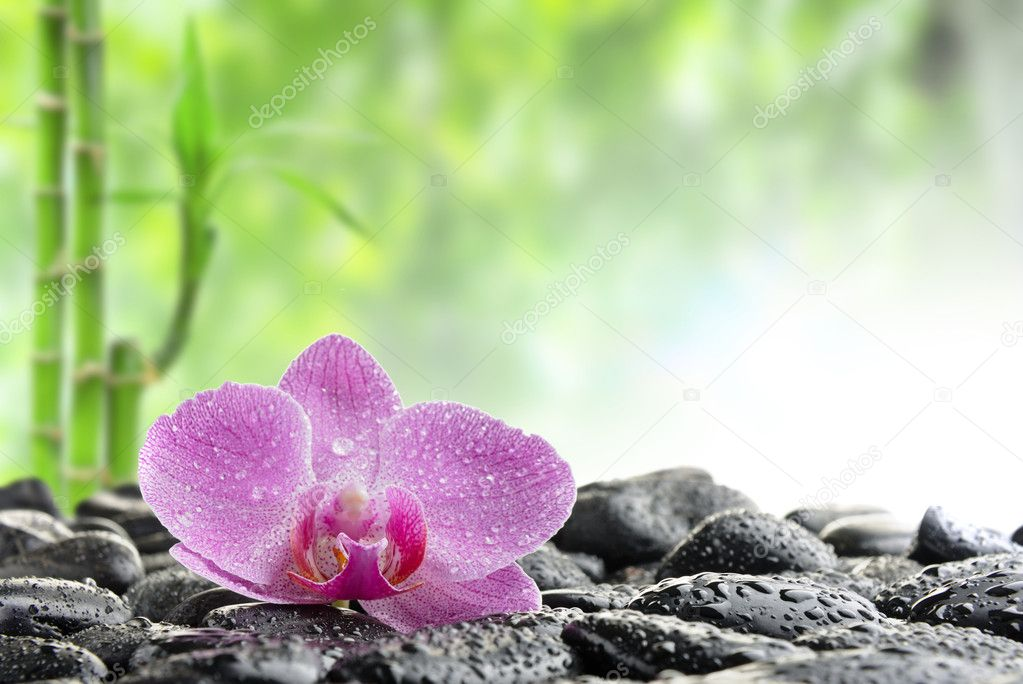 Zen stones and  orchid in the water  Foto Stock #4810786
