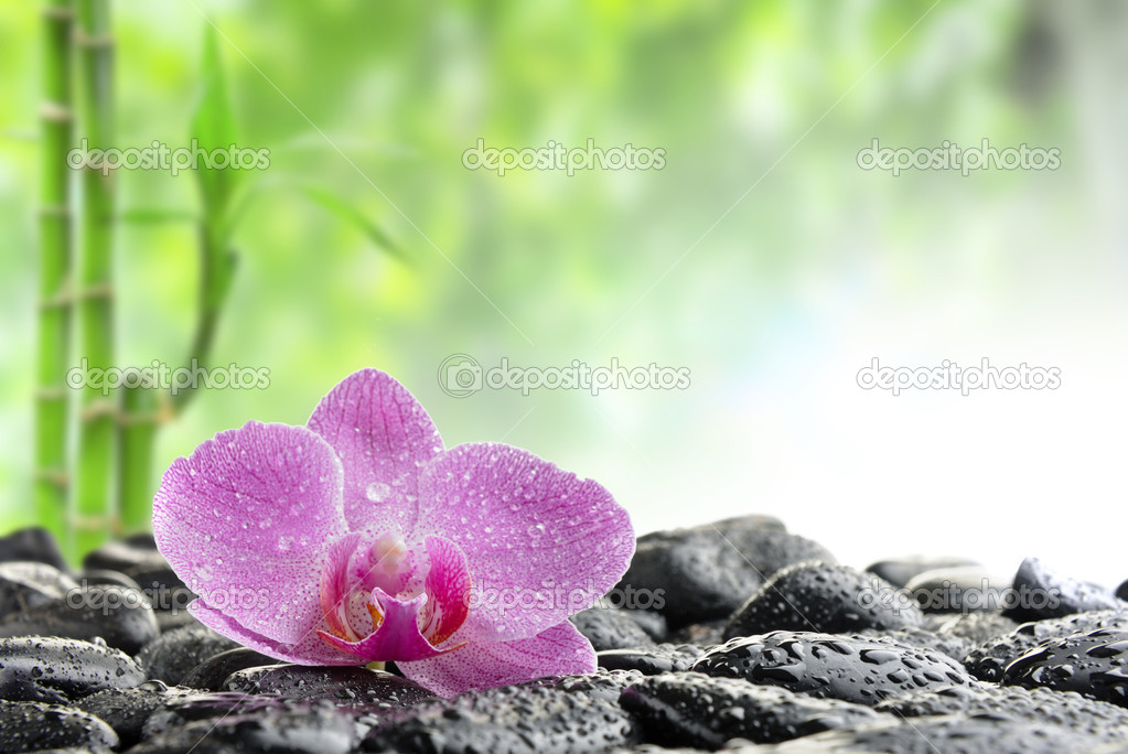 Zen stones and  orchid in the water   #4810786