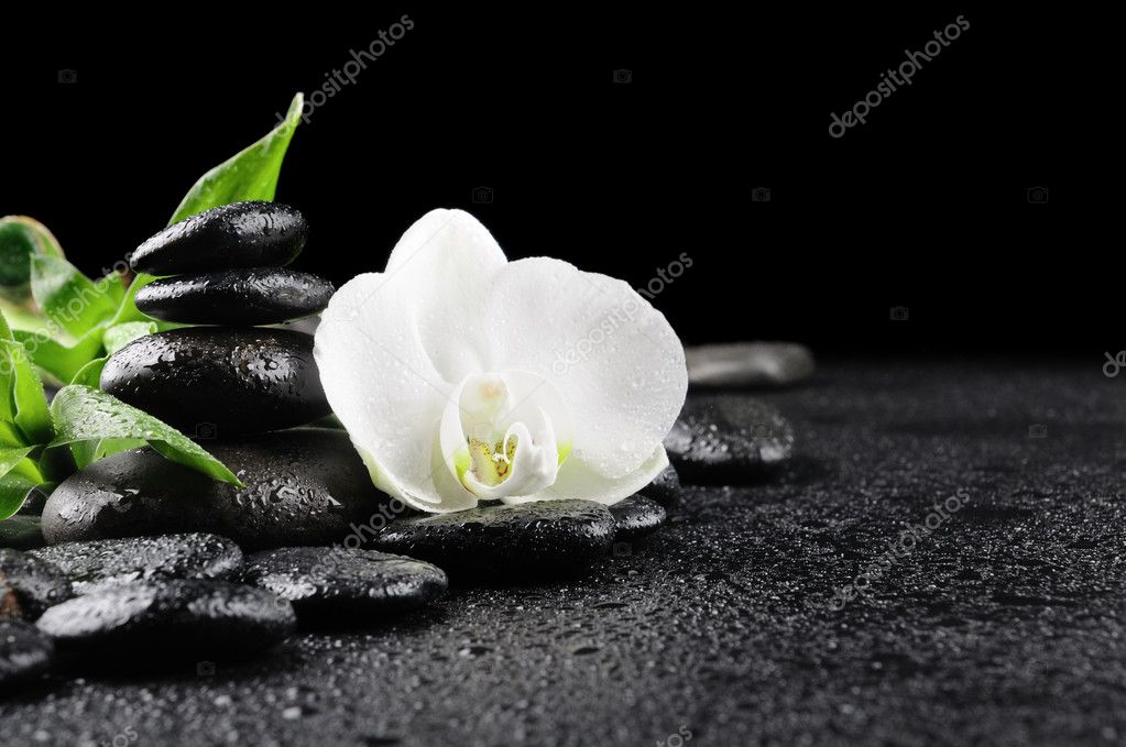 Zen stones and  white orchid in the water  Photo #4810859