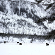 Herd buffalo in Yellowstone NP, USA — Foto Stock