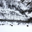 Herd buffalo in Yellowstone NP, USA — Foto de Stock