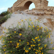 Flowers at old Ancient Roman aqueduct in Ceasarea at the coast o — Stock Photo
