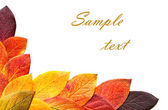 Autumnal leaves. — Stock Photo