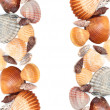 Cockleshells - Stock Photo