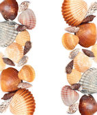Cockleshells — Stock Photo