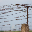 Stock Photo: Barbed wire