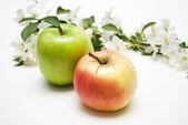 Яблоко и цветы — Stock Photo