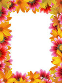 Flower frame vertical — Stock Photo