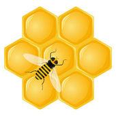 Honingraat en bee — Stockvector