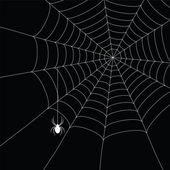 White spider and spider web — Stok Vektör