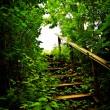 Staircase in a thicket — Stock Photo