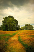 Mown hay on meadow — Stock Photo