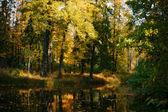 Rivier in herfst bos — Stockfoto