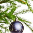 Decoration ball on fir branch — 图库照片