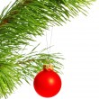Decoration ball on pine branch — Stock Photo #4666541
