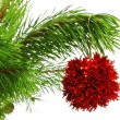 Decoration ball on pine branch — Stock Photo