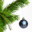 Blue decoration ball on fir branch — Stock Photo #4666594
