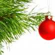 Red decoration ball on pine branch — Foto Stock