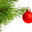 Red decoration ball on pine branch — Stock fotografie