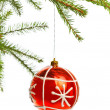 Red decoration ball on spruce branch — Stock Photo