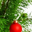 Red decoration ball on pine branch — Stock Photo