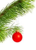 Decoration ball on pine branch — Stock Photo