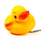 洗澡玩具鸭 — 图库照片