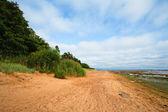 Praia no verão — Foto Stock