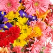 Group of gerbera flower head - Stock Photo