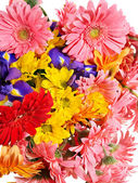 Group of gerbera flower head — Stock Photo