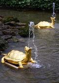 Fuente de tortuga — Foto de Stock