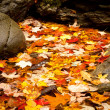 Fall leaves in river - Stock Photo