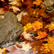 Frog deep in fall leaves - Stock Photo