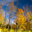 Reflection of fall leaves — Stock fotografie