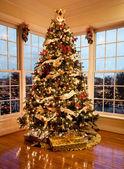 Hermoso árbol de navidad al atardecer — Foto de Stock