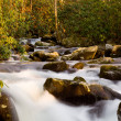 Raging stream in spring in Smokies — Stock Photo #5194592