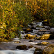 Raging stream in spring in Smokies — Stock Photo #5194724