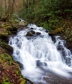 Raging stream in spring in Smokies — Stock Photo