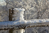 Frozen snow on wooden fencing — Stock Photo
