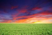 Morning meadow — Stock Photo