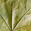 Yellow leaf - Stock Photo