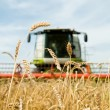 Ripe wheat with combine at background in field — Stock Photo